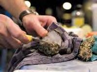 Gegrillte Austern mit Petersiliengel